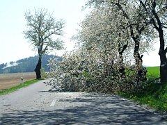 Vichr už kácí první stromy, takto dopadla jabloň u Okříšek na Třebíčsku.