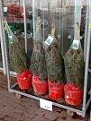 Lidé už kupují vánoční stromky.