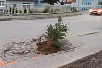 Výmol v silnici někdo opravil zasázením stromku