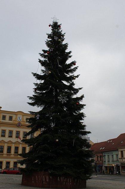 Jedle obrovská, která rostla vtřebíčské Nikovémově ulici, zdobí tamní Karlovo náměstí coby vánoční strom.