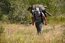 Popis fotky: Samec želvy sloní Diego - Pracovník Galapážského národního parku přenáší samce želvy sloní jménem Diego na ostrově Espaňola, kde byla více než stoletá želva vypuštěna zpět do volné přírody.    Quito - Do volné přírody na jednom z Galapážských
