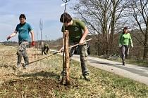 Dobrovolníci zde vysázeli dalších jedenáct ovocných stromů.