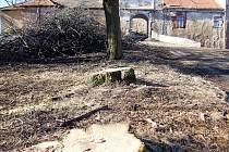 Staré lípy před vstupem do hradu byly v takovém stavu, že bylo potřeba je pokácet nebo nechat bezpečná torza. V nich žijí vzácné druhy teplomilných brouků.