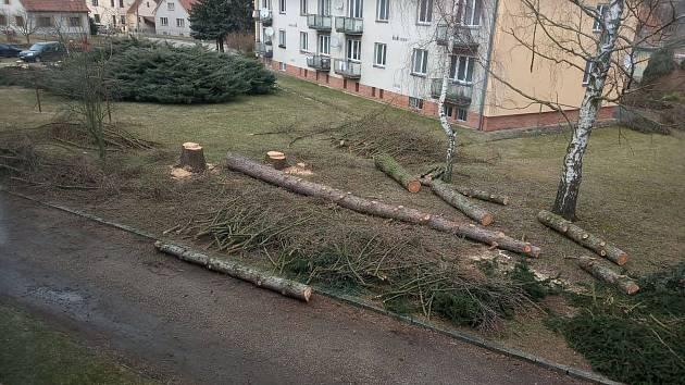 Kácení stromů na sídlišti Jan Žižky v Telči.