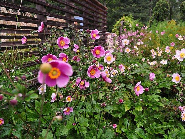 """Přírodě blízké - někdy také laicky nazývané """"přírodní"""" zahrady - se těší stále větší oblibě."""