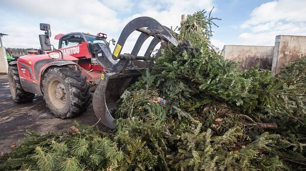 OBRAZEM: Z vánočních stromků bude za pouhé tři měsíce kompost