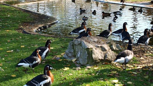 Malá ptačí zoo ve Vanči.