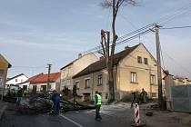 Lidé v Táborské ulici si vymohli skácení osmdesátileté lípy