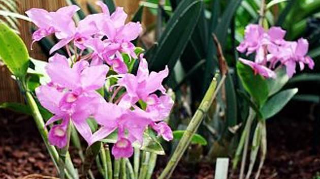 Lidé obdivovali rozkvetlé orchideje.