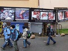 Drastická výstava v Sirotčí ulici zaskočila snad každého. Podle studentů i učitelů se organizátoři zachovali zvlášť necitlivě zejména vůči malým dětem, které chodili kolem na oběd.
