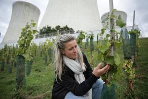 Jaderné vinobraní pod chladícími věžemi Dukovan.