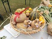 Jablkobraní nabídne přehlídku výpěstků a podzimní speciality.