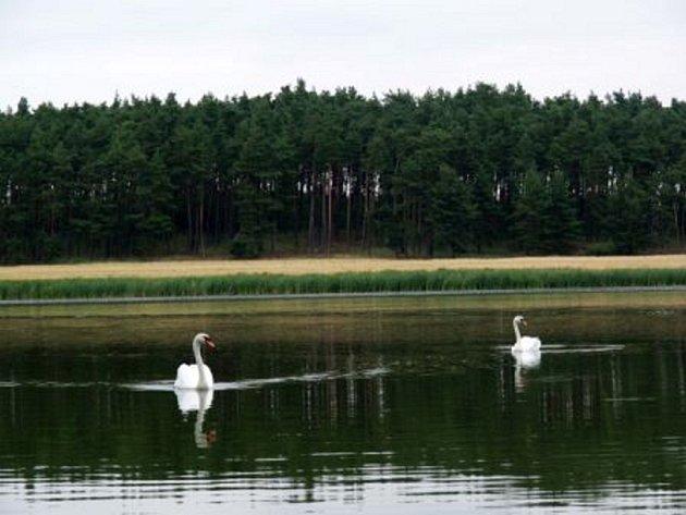 Kvalita vody ve sledovaných přírodních koupalištích už teď není dobrá.