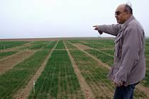 Bohumil Vítek ukazuje mozaiku políček s ozimou pšenicí. Na každém ze sedmi set malých polí je po tři roky testován jiný druh. Holá místa ukazují, že tato odrůda nepřečkala letošní extrémní mrazy, kdy bylo i -22,3 °C.