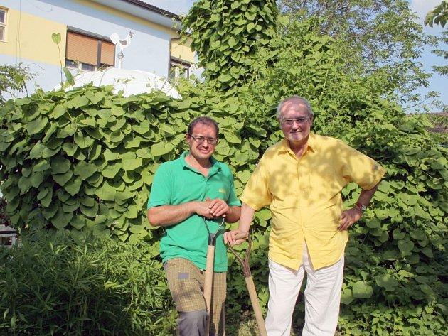 Zahradník Vladislav Vejtasa (vlevo) a domácí pán Pavel Kryštof Novák stojí u zahradního altánu, který pokrývají velké listy letitého podražce.