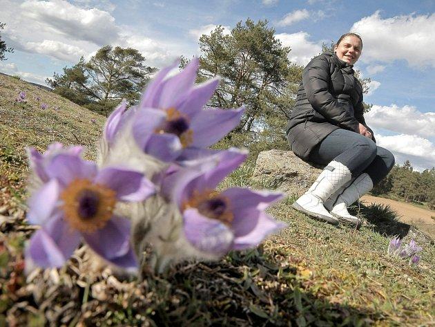 Obdivovat jedny z prvních jarních květů lze u Trnavy v chráněné lokalitě Kobylinec