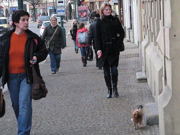Nejčastějším prohřeškem, kterého se majitelé psů dopouštějí, je volný pohyb psů a znečištění veřejného prostranství.