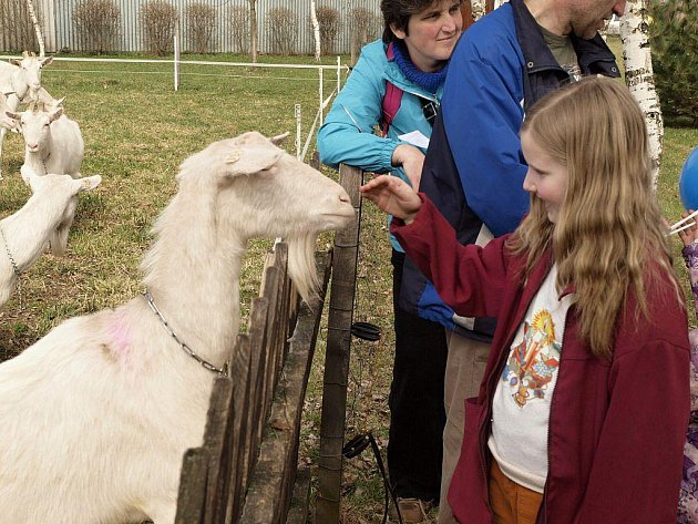 Na kozí farmě v Ratibořicích na Třebíčsku se v sobotu konala premiérová akce letošních farmářských slavností, pořádaných v celé zemi. Krom důrazu na zamědělskou produkci nabídli organizátoři i pestrý program i pro děti i rodiče.