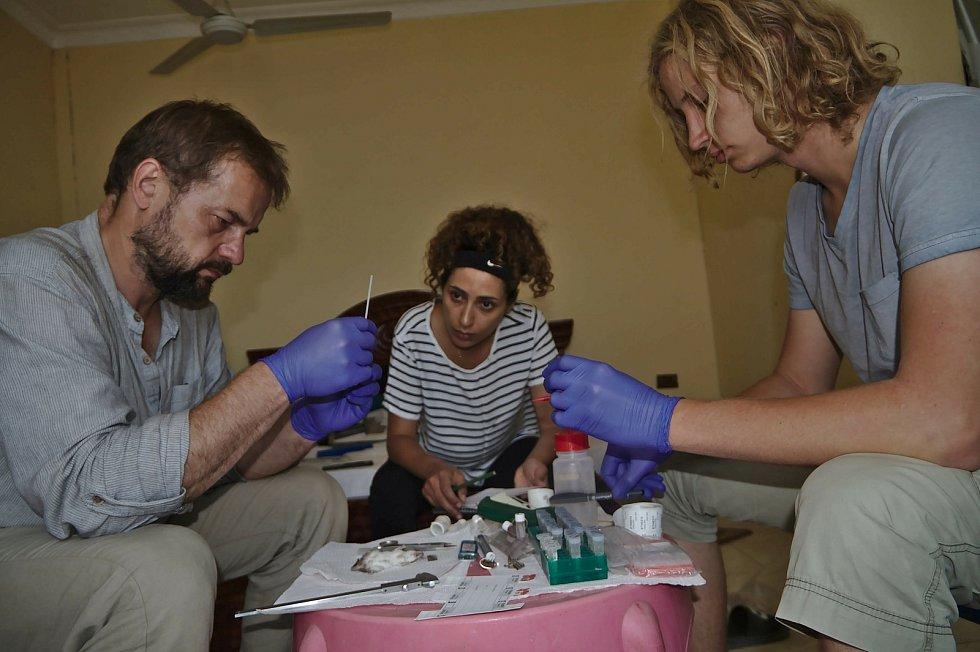 Mezinárodní tým biologů pod vedením Josefa Bryji obohatil savčí faunu hned o pět nových rodů hlodavců.