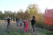 Podzimní výsadba stromů ve Lhánicích.