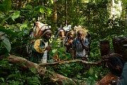 Cesta pralesem není nic snadného. Krom nebezpečných velkých savců, jako jsou pralesní sloni či buvoli, můžete narazit také na jedovaté hady nebo se snadno ztratit.