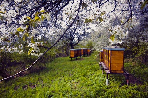 """Na včelaření Tomáš oceňuje řadu věcí. """"Pracuju vpřírodě, vklidu, bez rušivých elementů a pouze za pěkného počasí. Je to vlastně irelax. Automaticky se člověk začne zajímat odalší obory – orostliny, krajinu, péči oni, přírodu obecně,"""" vysvětluje. Co"""