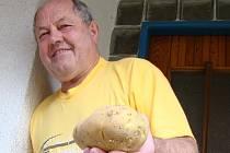 Zdeňku Malcovi z Trnavy se podařilo vypěstovat brambory, které svou hmotností vystačí za tři běžné.