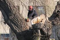 STROMY USTOUPÍ ZDEM.  V Třebíči padne k zemi celkově šedesát stromů okolo řeky Jihlavy. Ustoupí budovaným protipovodňovým opatřením.  Povodí Moravy v budoucnu nechá vysázet nové.