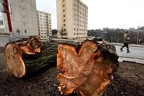 Městskému úřadu přišlo jménem několika obyvatel Revoluční ulice poděkování za odstranění nebezpečných stromů.  Lidé uvedli, že už z nich konečně nebudou mít strach.