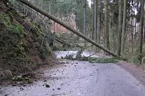 Přes vozovka z Račerovické ulice do Poušova spadlo v důsledku silného větru 13 stromů.