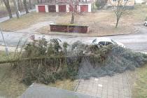 Pád stromu v Jemnici.