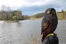 Řezbář vrací dřevo k rybníku. Podívejte se