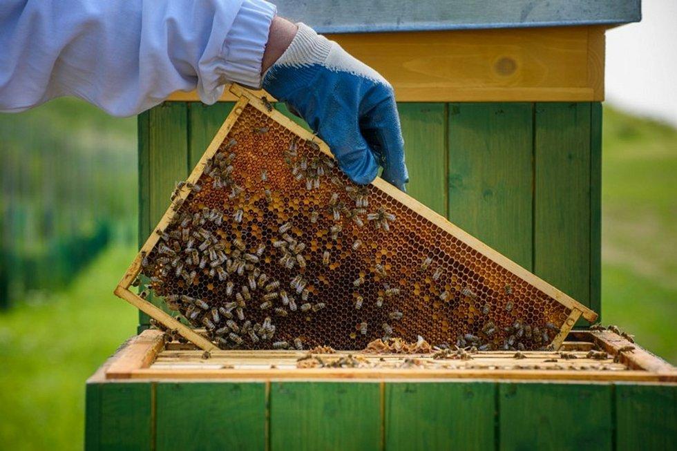V areálu elektrárny je nově pět včelínů.