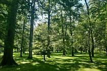 Les prospěje vašemu zdraví a má stále otevřeno