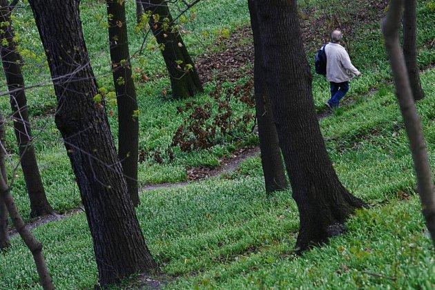 V lese u Hamrů chce výtvarník umístit zrcadlo.