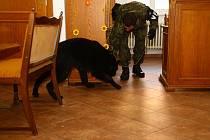 Aby byli psi sloužící u Vojenské policie co nejlépe připraveni, prodělávají výcvik v různém prostředí, kde na mě působí celá řada vlivů, se kterými se běžně nesetkávají.