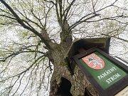 Lípa u Chobotského dvora v Kuklíku se uchází o titul Strom roku.