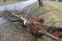 Desítky starých nebo podmáčených stromů u silnic neodolaly náporům víkendového větru. Tento strom částečně blokoval silnici v Chlumětíně na Žďársku.