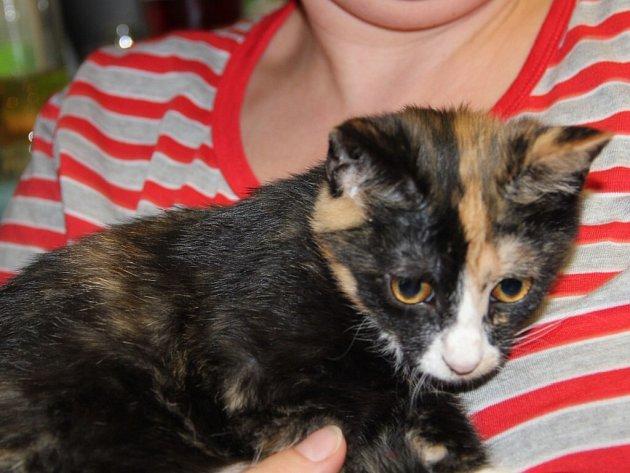 Kočička Rozárka chovatelky Petry Kamenské nákazu dosud neznámým virem přežila.