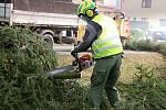 Ve Žďáře začali s obnovou zeleně.