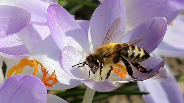 Světový den včel připadá na 20. května.