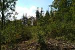 Vytěžená místa zarůstají náletovými dřevinami.