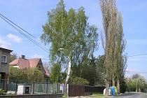Pětice topolů v lokalitě na Příhoně v obci Polnička bude pravděpodobně pořezána. Představují nebezpečí jak pro lidi, tak pro jejich majetek.