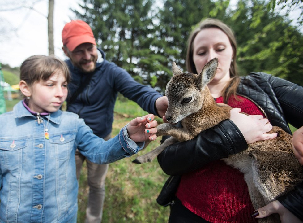 Záchranná stanice Pavlov pro hendikepované živočichy.
