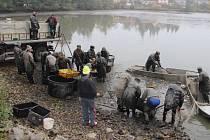 Jen pár stovek metrů od centra největšího města Žďárska natáhli síť rybáři. Ve Žďáře nad Sázavou včera vylovili městský Horní rybník (na snímku). Výlov pro žďárskou radnici zajistili Kinského rybáři.