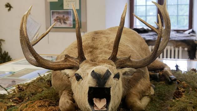 Výstava ve žďárském muzeu bude otevřena už jen pár dní