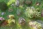 Kvetoucí zahrada