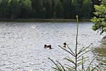 Rybník Medlov patří k často vyhledávaným vodním plochám.