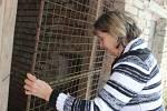 Kvůli ptačí chřipce dnes sčítali ve Štěpánově nad Svratkou domácí drůbež, okrasné ptactvo a jiné opeřence. Miroslava Němečková má 11 slepic, všechny je zavřela do kurníku.