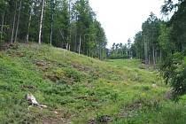 Vytěžená místa na Žďársku měla být zalesněna nejpozději loni v květnu.